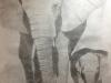 SarahK-Graphite-Elephant2