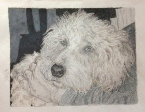 Gray Colored Pencil