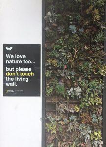 Laguna Beach Living Wall
