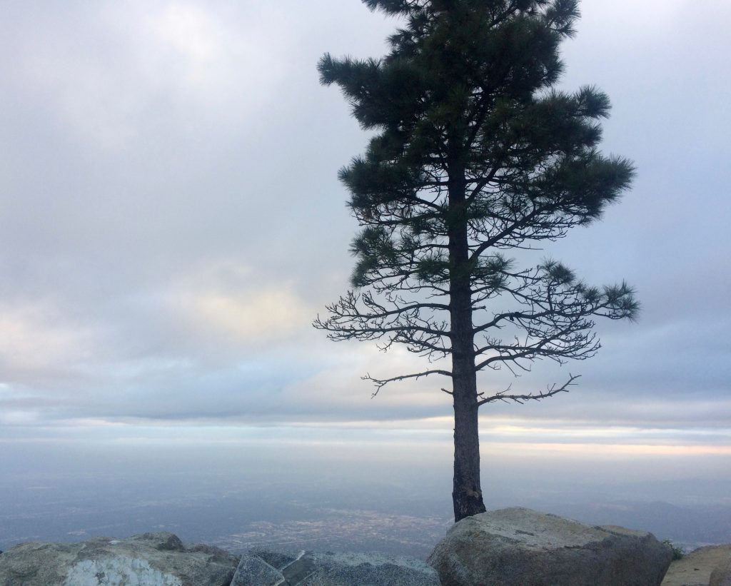 Mount Wilson Observatory View