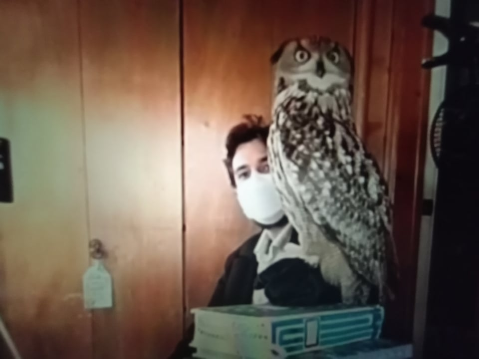 Ollie the Eurasian Eagle Owl is ready to be sketched by Pastimes for a Lifetime students