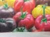 SophiaH-OP-Tomatoes2