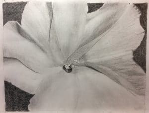 Gayle W.'s Graphite Floral Tone study