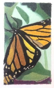 Sophie R.'s Oil Pastel Butterfly Study
